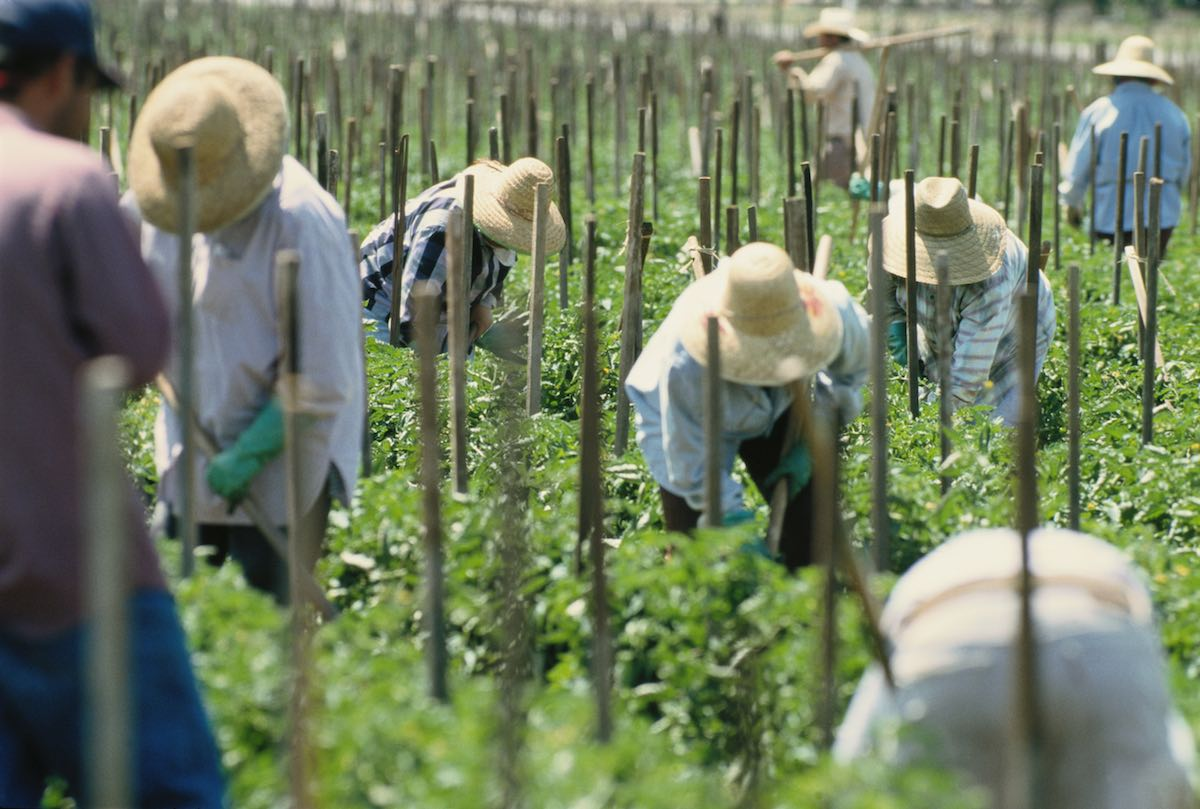 Children of Essential Farmworkers Worry About Their Parents